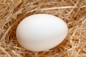 White Layer Hatching Eggs