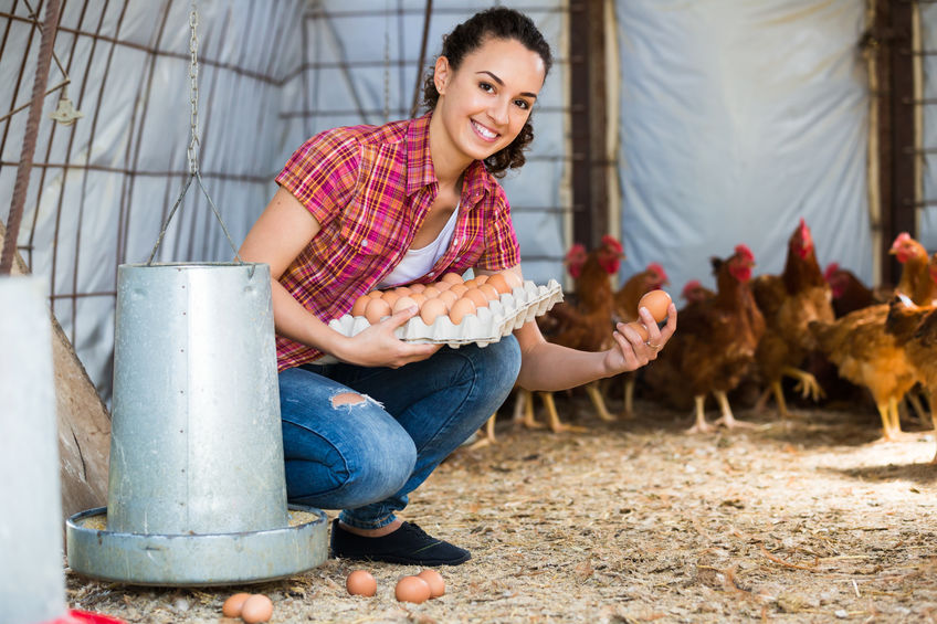 Chickens for Eggs- Best Egg Laying Chickens