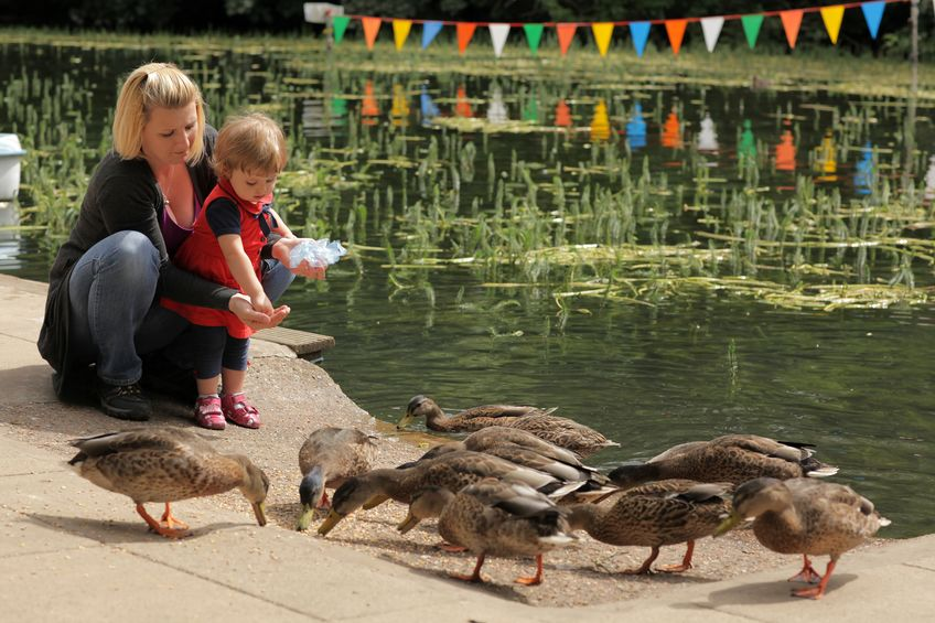 Feed and Nutrition for Ducks