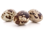 Quail Hatching Egg Golden Assortment
