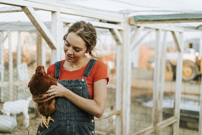 How to Raise Chickens- Frequently Asked Questions